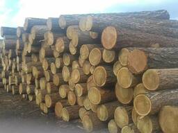 Commercial offer Supply cylindering logs - фото 4